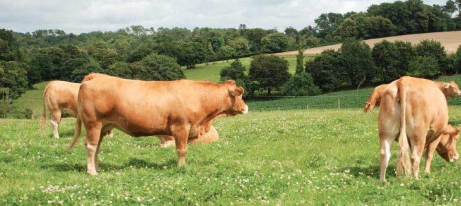 Mayenne : la crise entraîne une baisse du prix de la viande bovine